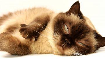 Jak sobie radzić z alergią u zwierząt domowych?