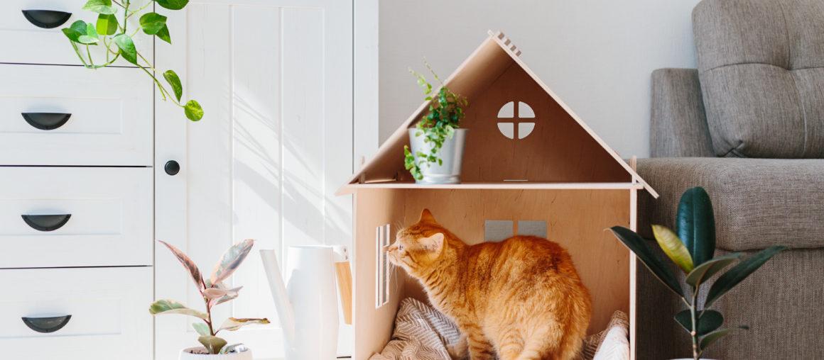 Jak usunąć zapachy zwierząt domowych?