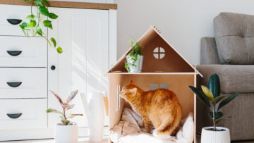 Jak usunąć zapachy zwierząt domowych