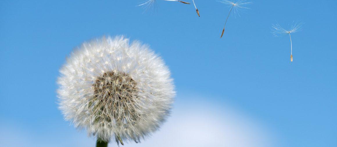 Jak leczyć alergie sezonowe?