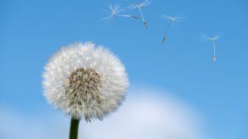 Czy oczyszczacz powietrza powinien działać cały czas?