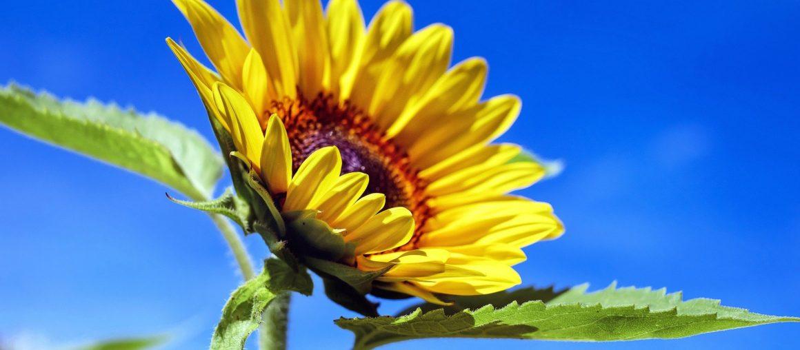 Oczyszczacz powietrza czy rośliny oczyszczające powietrze, co wybrać?