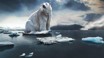 Pył skalny w walce z CO2