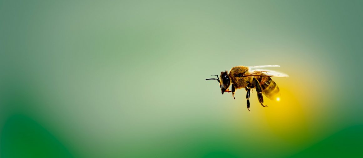 Zanieczyszczenie powietrza jest głównym zagrożeniem dla pszczół miodnych