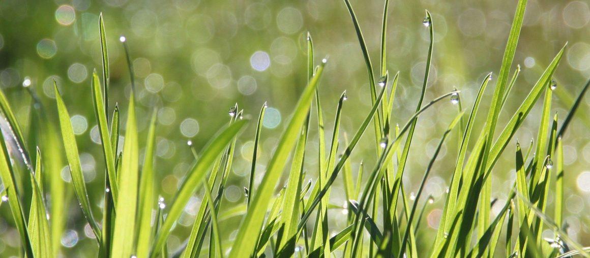 Wypalanie traw a środowisko