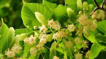 Czy oczyszczacz powierza zwalcza alergię, czyli co pyli w czerwcu?