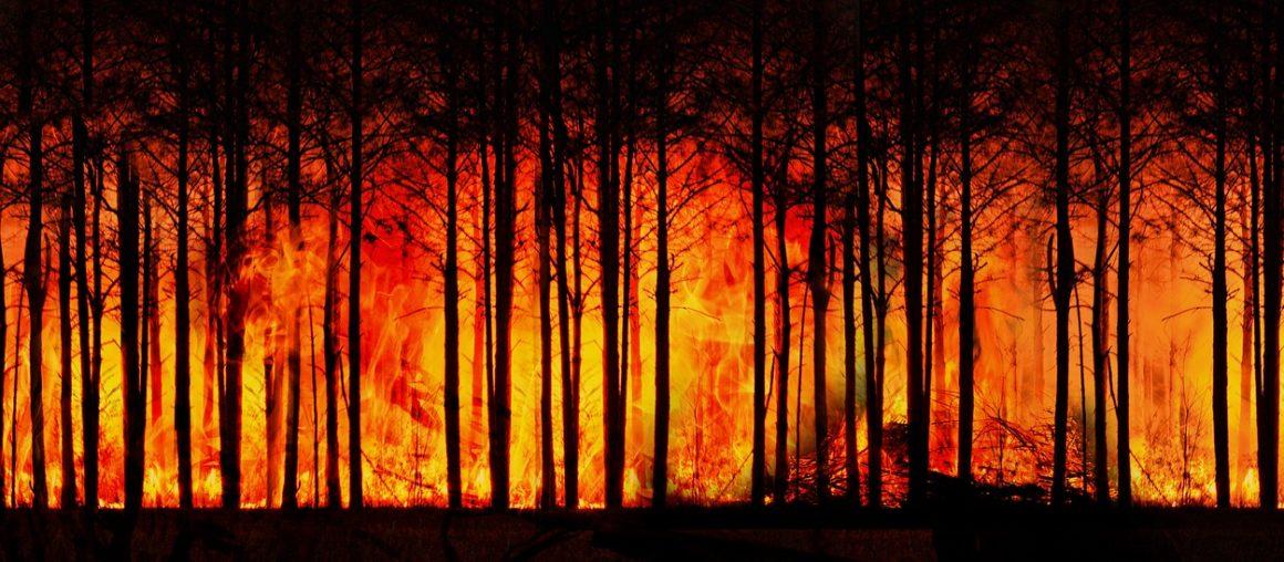 Dlaczego dym z pożarów jest niebezpieczny?